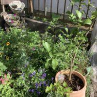 心地よい暮らし 庭づくり