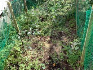 家庭菜園 裏庭